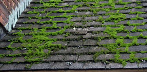 How To Deal With Moss On Your Roof