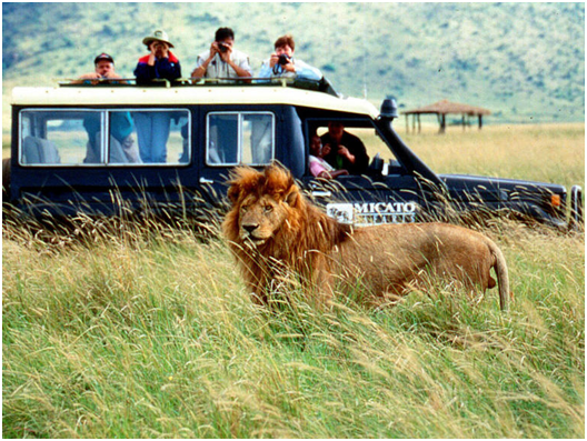 Safari In Tanzania – A Gift For Your Family This Season!